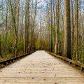adventure-board-boardwalk-21423